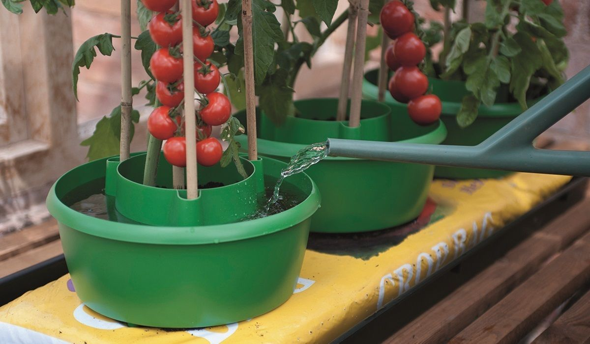 Plant Halo Watering Rings